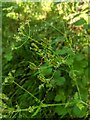 TF0820 : Seed Pods by Bob Harvey