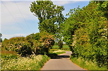 ST8180 : Littleton Drew Lane, Acton Turville, Gloucestershire 2020 by Ray Bird