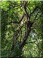 TF0820 : The broken branch by Bob Harvey
