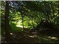 TF0820 : Sunlight by Bob Harvey