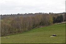 TQ6139 : Woodland by N Chadwick