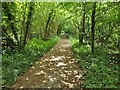 SU6523 : Woodland Path on Nature Reserve by John P Reeves