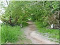 SK6843 : Trentside footpath by Alan Murray-Rust