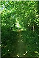 TL5109 : Green Tunnel on the Stort Valley Way by Glyn Baker
