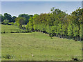SD7807 : Fields to the North of the Manchester, Bolton and Bury Canal by David Dixon