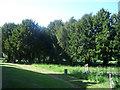 SE3528 : St John's church, Oulton: yew trees by Stephen Craven