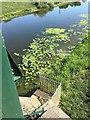 TF1169 : OSBM Bolt: Bardney Bridge by Brian Westlake