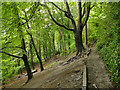 SE3136 : Path along the top of Gledhow Valley Woods by Stephen Craven