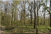 TQ5943 : Gorse Wood by N Chadwick