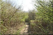 TQ5943 : Tunbridge Wells Circular Walk by N Chadwick
