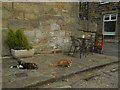 SE2337 : Happy cats by Stephen Craven