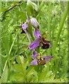 SK6144 : Gedling Country Park Wildlife, 5/6/2020 – 7 by Alan Murray-Rust