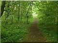 SK6942 : Footpath in Springdale Wood by Alan Murray-Rust