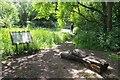 TQ5291 : The Damsel Fly Pond by Glyn Baker