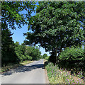 TL4047 : Shepreth Road on a June morning by John Sutton