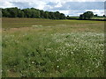 ST8880 : Growing crops and a wildlife margin by Neil Owen