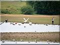 SD7809 : Water Birds at Elton Reservoir by David Dixon