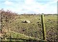 NZ1148 : Sheep beside Knitsley Lane by Robert Graham