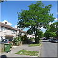 TL4956 : Cherry Hinton: Bridewell Road by John Sutton