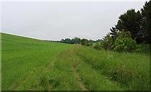 NO3602 : Path to Myreside Pond by Bill Kasman