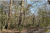 TQ5742 : Southborough Common by N Chadwick
