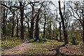 TQ5742 : Tunbridge Wells Circular Walk, Southborough Common by N Chadwick