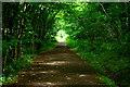 TL2554 : Entering Waresley Wood by Tiger