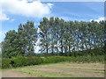 TQ6742 : Belt of trees near Brenchley by Marathon