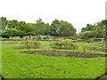 SE2632 : Western Flatts Cliff Park: rose garden by Stephen Craven