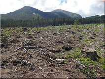 J3629 : Clear cut section of Donard Wood by Eric Jones