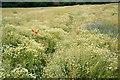 TQ3864 : Field Near Wickham Court by Peter Trimming
