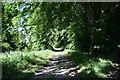 NJ7216 : Track on the Fetternear Estate by Bill Harrison