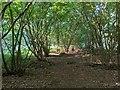 TF0820 : Light dappled by leaves by Bob Harvey