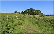 NO3102 : Not the Braes Loan Trail! by Bill Kasman