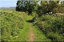 NO3102 : The Braes Loan Trail by Bill Kasman