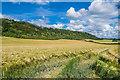 TQ2252 : Barley field by Ian Capper