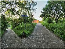 SD7807 : The Banana Path by David Dixon
