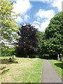 SX9393 : Footpath and trees, Exeter Higher Cemetery by David Smith