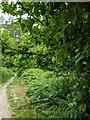 TF0820 : The tree by the path by Bob Harvey