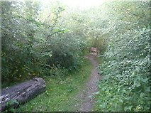 SO3958 : Path to Pembridge Village Green Conservation Area by Fabian Musto