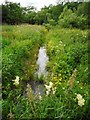 NS5473 : Wild flowers beside the ditch by Richard Sutcliffe