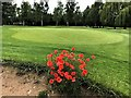 TF4316 : Poppies near the 15th green on Tydd St Giles golf course by Richard Humphrey