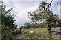 TM2130 : St Michel's Parkland by Glyn Baker