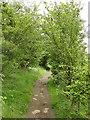 SE2425 : Path among the oaks by Stephen Craven