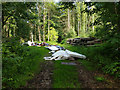 TQ3035 : Fly tipping, Worth Lodge Forest by Robin Webster