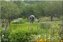 SO4465 : Walled Garden at Croft Castle, 5 by Jonathan Billinger