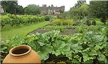 SO4465 : Walled Garden at Croft Castle, 6 by Jonathan Billinger