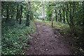 SE8430 : Path leading to Thimblehall Lane by Ian S