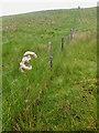 NY1324 : Fence, Fellbarrow by Mick Garratt
