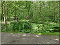 SE2839 : Former mill pond in Adel Woods by Stephen Craven